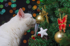 White cat sniffs tree Royalty Free Stock Photos