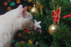 White cat sniffs tree Royalty Free Stock Photography