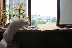 White cat sniffs tubes with oil paints and canvas for painting in the afternoon on the window with flowers. White cat sniffs tubes with oil paints and canvas for stock image
