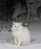 White cat in snow Royalty Free Stock Photography