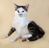 White cat with spots teenager sits on yellow Royalty Free Stock Images