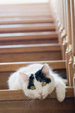 White cat on a stairs Stock Photos