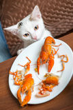 White cat steals crayfish from dish Royalty Free Stock Photo