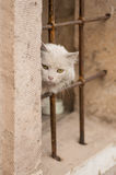 White cat on the streets of the ancient city Royalty Free Stock Photo