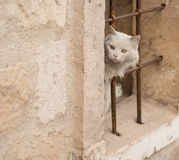 White cat on the streets of the ancient city Royalty Free Stock Photography