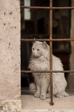 White cat on the streets of the ancient city Royalty Free Stock Photos