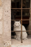 White cat on the streets of the ancient city Stock Images