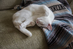 White cat stretching on couch Royalty Free Stock Photography
