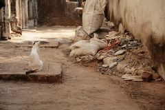 A white cat  sits among the ruins in the slums. A white cat with a striped tail and spot on the head sits among the ruins in the slums Stock Images