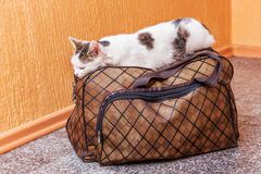 The white cat is on a suitcase. Waiting for the train at the train station. Passenger with a suitcase while traveling_. The white cat is on a suitcase. Waiting stock images