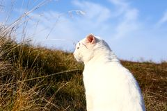 White cat. Sunbathing on a meadow royalty free stock photography