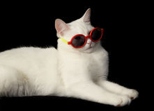 White cat with sunglasses royalty free stock photo