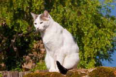 Cat,charnay,rhone,france Royalty Free Stock Photography