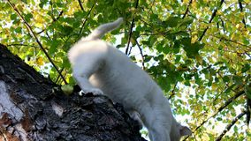 White cat on the tree.  stock video footage