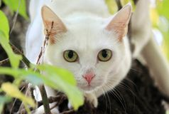 White cat on the tree Stock Image