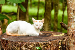 Sleeping white cat on the tree Royalty Free Stock Images