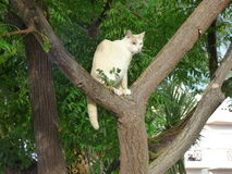 White cat in a tree. Stock Photos