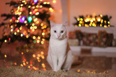White cat in Christmas lights Stock Images
