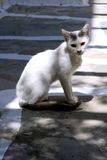 White cat under shadow in Mykonos Stock Image