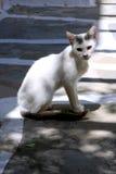 White cat under shadow in Mykonos Stock Image