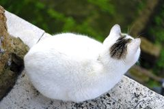 White cat is watching somewhere. Good quality positive close up photo of a charming cat on the street. It`s sunbathing or maybe slightly sleeping: fluffy white Royalty Free Stock Photography