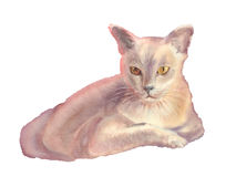 White cat watercolor illustration isolated. Illustration with a cute white cat. Watercolor isolated. Hand drawn Royalty Free Stock Photo