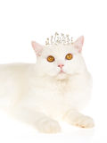White cat wearing tiara crown Royalty Free Stock Images