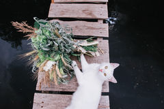 White cat and a wedding bouquet Stock Image