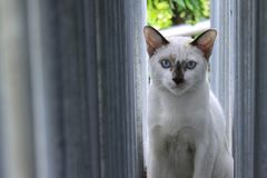 White cat in the window Royalty Free Stock Photography