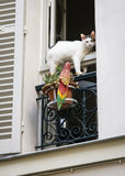 White cat on the window, Paris, France Stock Images