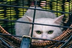 White Cat wirth green eyes. In the cage Royalty Free Stock Images