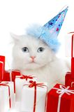 White Cat With Gifts Stock Photography