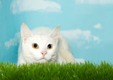 White cat with yellow eyes crouched in tall grass Stock Photos