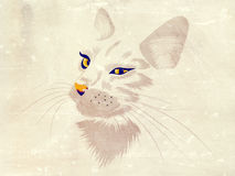 White cat with yellow eyes Royalty Free Stock Image