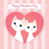 White cats couple heart pink card Royalty Free Stock Photo