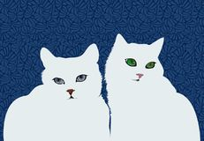 White cats on dark blue background. Couple white cat with beautiful eyes Royalty Free Stock Photo