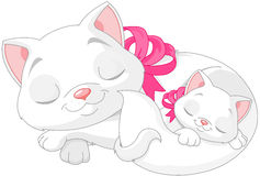 White Cats Stock Photos