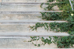 White cement stairs covered green leaves ivy plant. greenery house home decoration design idea. Stock Photo
