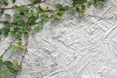 White cement  texture wall  leaf Stock Images