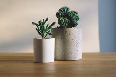 White Ceramic Flower Pot With Green Cactus Plant on Brown Wooden Surface Royalty Free Stock Photo