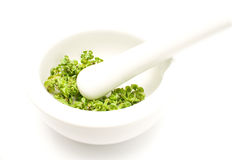 White ceramic mortar and pestle with dry basil Stock Images