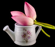 White ceramic watercan, sprinkler, with pink lotus, water lily flowers, close up Stock Photos