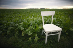 White chair in the field Stock Photo