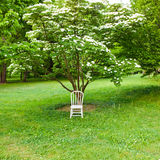 White chair in spring  park. Stock Photography