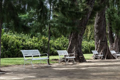 White chairs beside big trees. Royalty Free Stock Photo