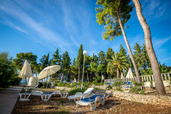White chairs in pine forest. White relaxing chairs in pine and palm forest at Mediterranean coast on Croatian Island of Brac Royalty Free Stock Photo