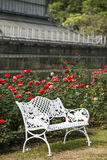 White chairs on red rose gardens Royalty Free Stock Photos