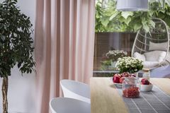 White chairs at table with fruits in dining room interior with plant, pink drapes and window. Real photo. Concept royalty free stock photos