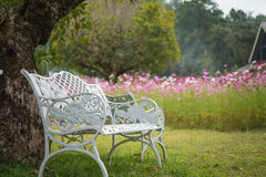 White chairs under tree Stock Photos