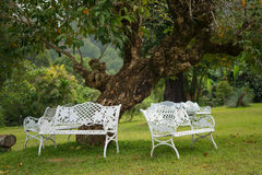 White chairs under tree Royalty Free Stock Image